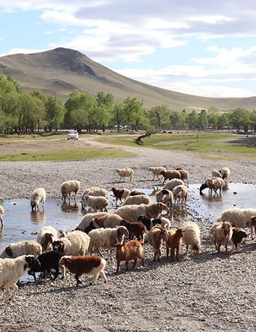 몽골의 진짜 얼굴을 만나다